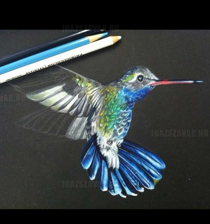 fantasztikus ceruzarajz kolibri