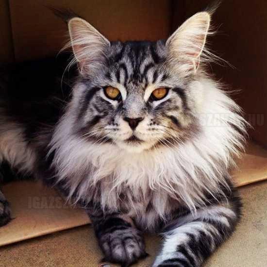a legszebb macska a világon