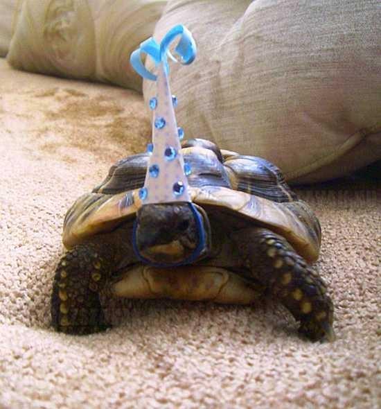 ez a teknös ma ünnepelte a születésnapját