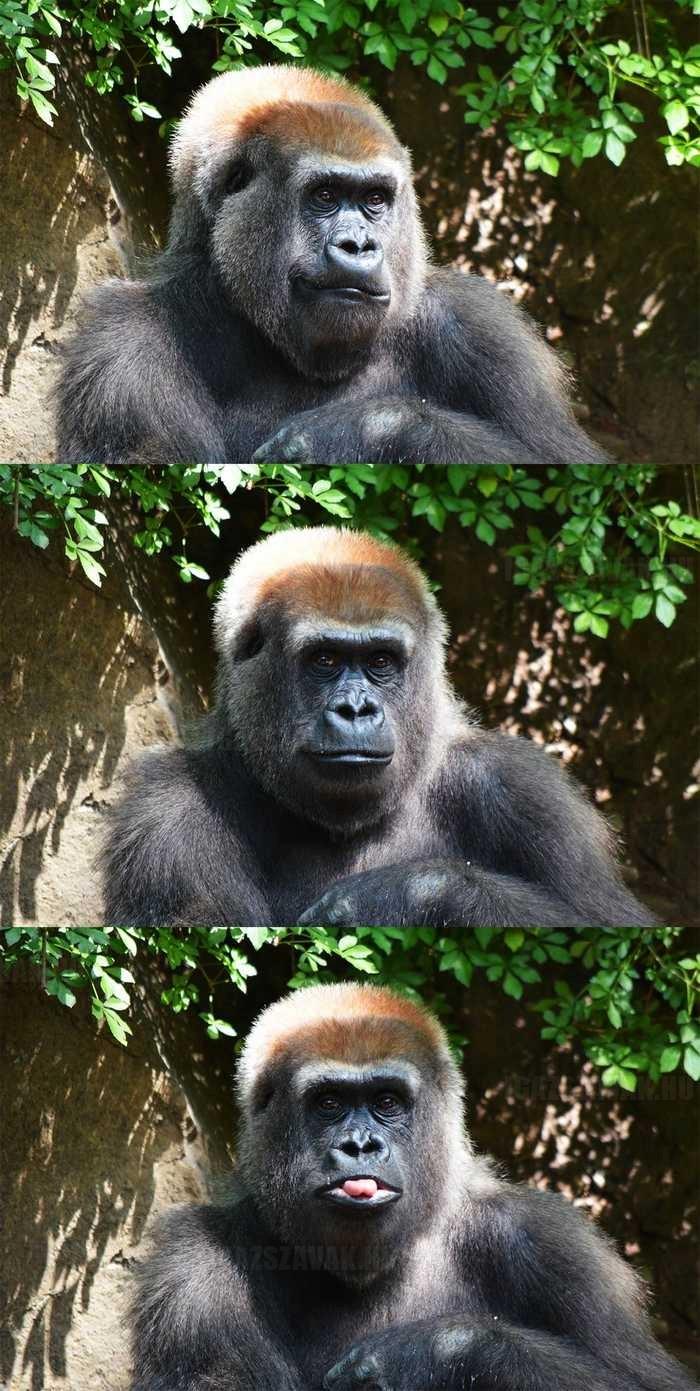találkoztam Júliával a Bronx-i állatkerben aki pózolt nekem