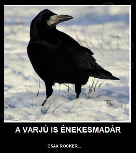 A varjú is énekesmadár...