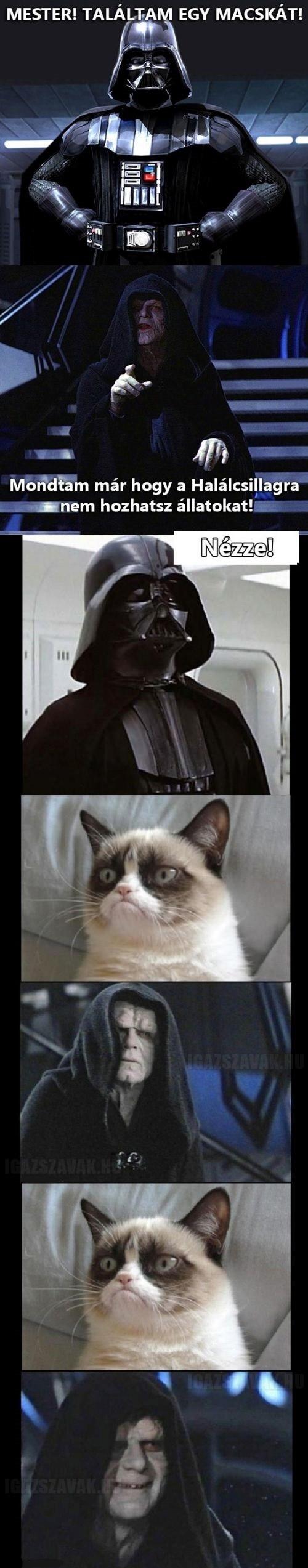 Grumpy Cat és a sötét oldal…