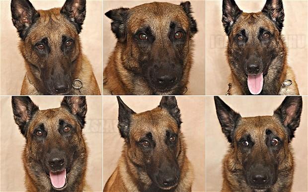 Tudományos tény ösztönösen értelmezzük a kutyák arckifejezéseit