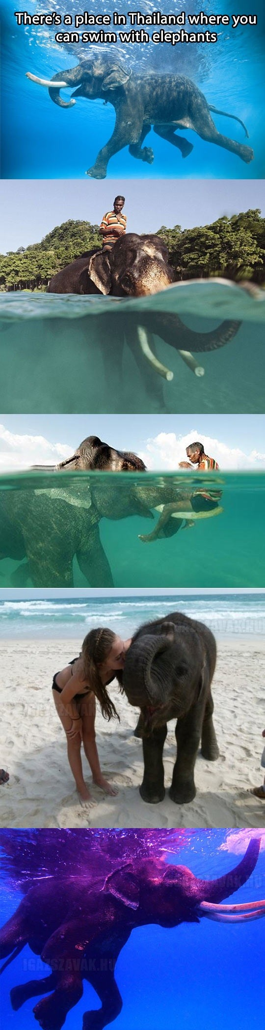 cool-elephants-swimming-Thailand-beach