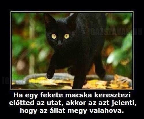 Fekete macska...