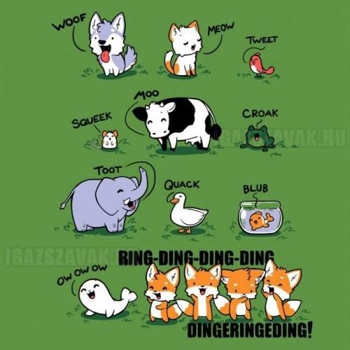 Mit mond a róka