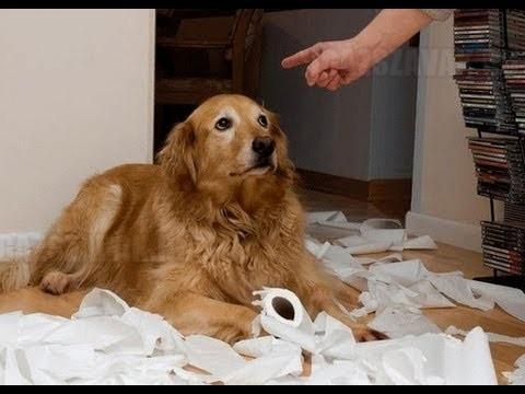 Amikor a kutyák elszégyellik magukat