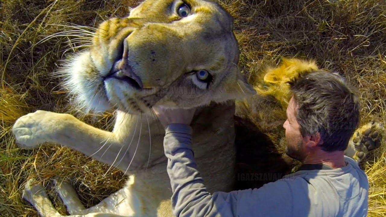 Így ölelgess oroszlánokat