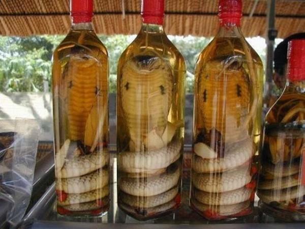 3 hónapig egy üvegben volt a kígyó majd megmart egy mebert