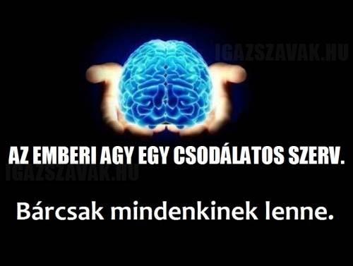 Az emberi agy egy csodálatos szerv