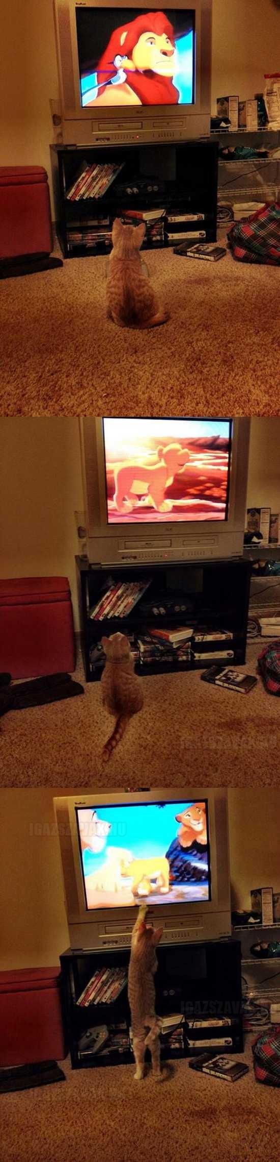 mindenki szereti az oroszlánkirályt