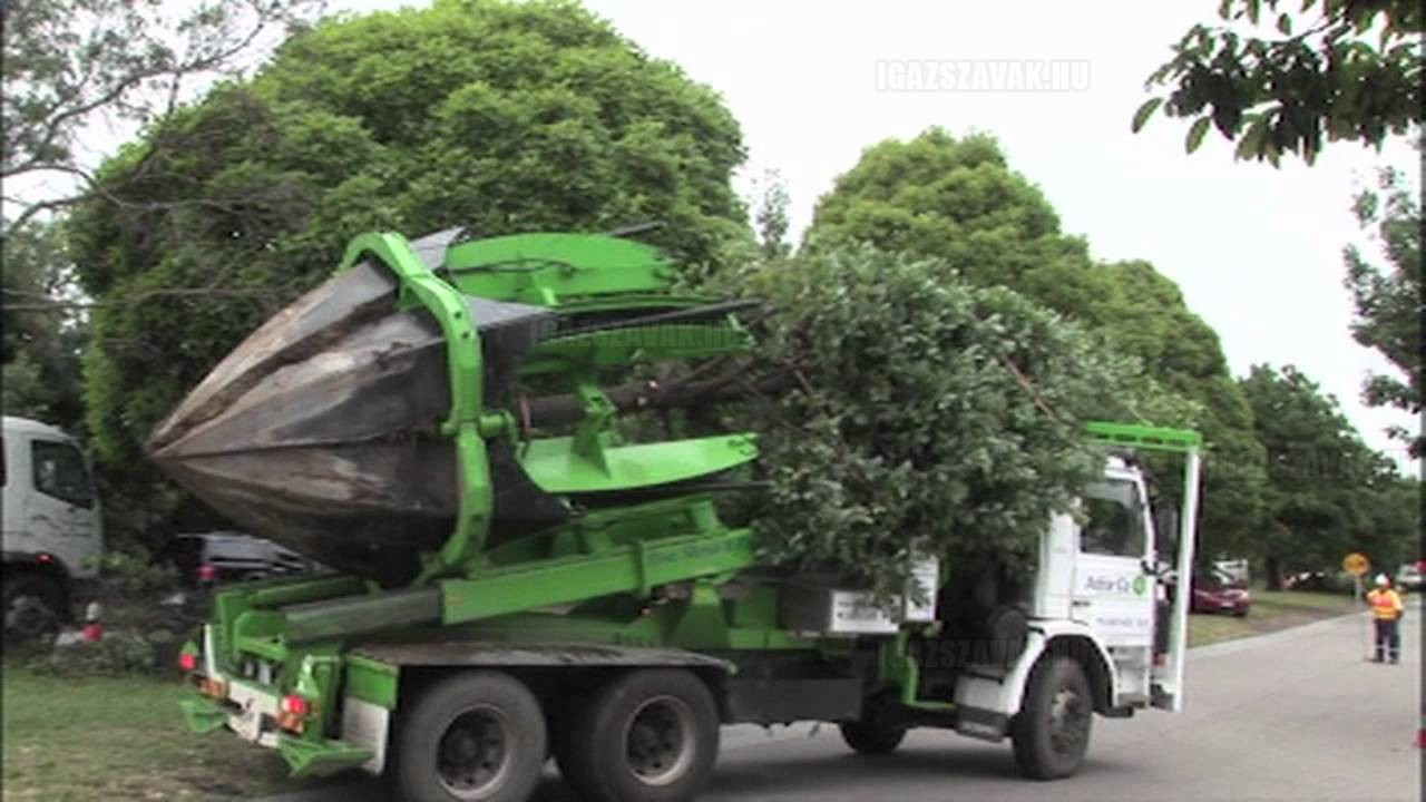 Van ahol nem kivágják a fákat, hanem elköltöztetik!