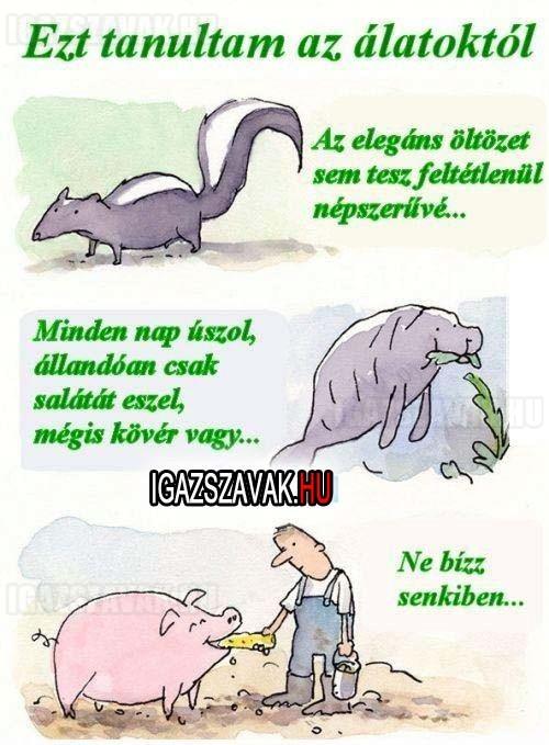 Ezt tanultam az állatoktól!