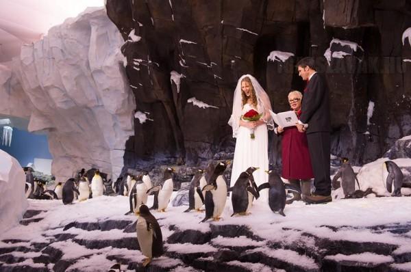 Nem fogjátok kitalálni, hol tartottuk az esküvőnket!