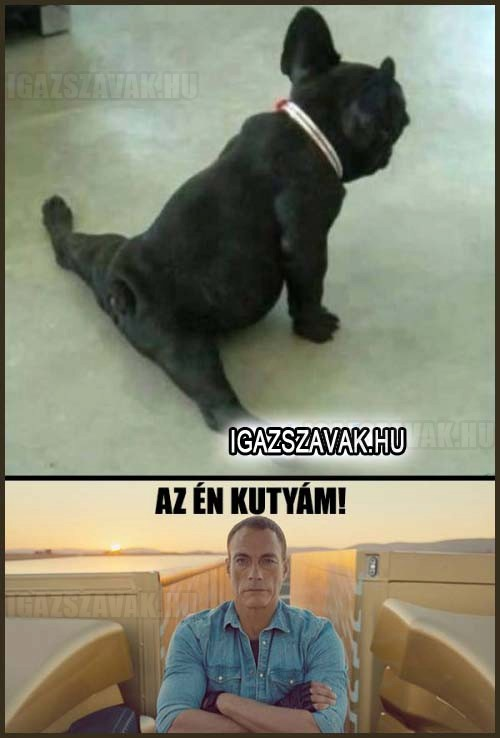 Az én kutyám