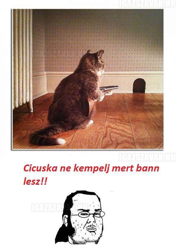 Cicuska