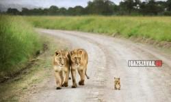 A büszke szülők