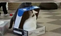 A macskák is lehetnek rosszak!