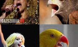 Ha a popsztárok madarak volnának