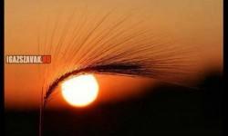 A nap szeme