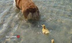 Kövessétek gyerekek a mamát!