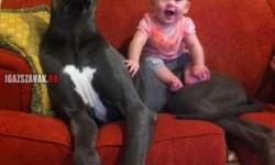 Megtaláltam a  legjobb babysittert!