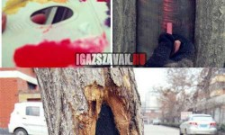A lány aki az utcai fákra fest