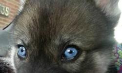 Azok a szemek