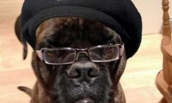 Ez a kutya pont úgy néz ki mint, Samuel L. Jackson