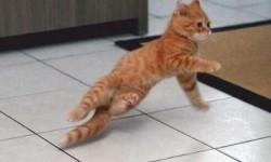 Táncoló mancsok