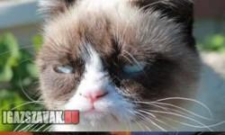 Grumpy Cat gyenge pillanata