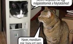 Macska logika
