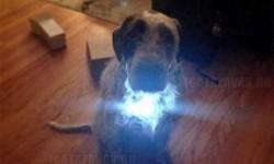 Így lett a kutyámból vasember