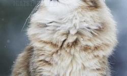A legfenségesebb macska fénykép, amit valaha is láttál