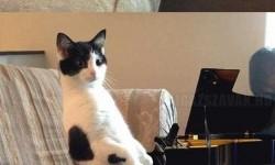 A macskám és a láthatatlan zongora