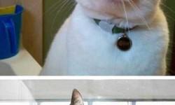 Derpy macskák
