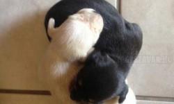 Yin és Yang kiskutyák
