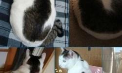 Egy cica akin egy másik cica van