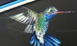 Fantasztikus kolibri ceruzarajz