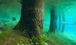 Meseszép elárasztott erdő