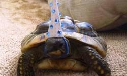 Ez a teknős ma ünnepelte a születésnapját