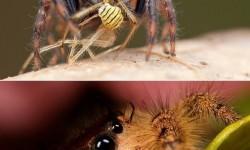 A pókok is lehetnek aranyosak