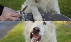 Így iszik a kutyám