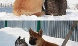 A világ legjobb barátai