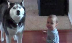 """Egy kisbaba és egy kutya """"beszélgetése"""". Nem lehet nevetés nélkül végignézni!"""