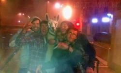 Részeg fiatalok elloptak egy cirkuszi lámát, és végigbulizták vele az éjszakát Bordeaux-ban